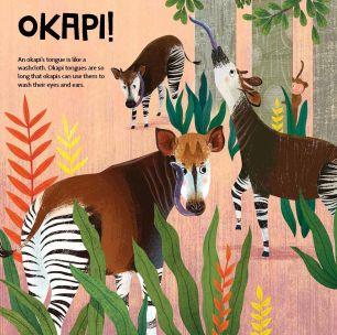 Photo4-Liu okapi