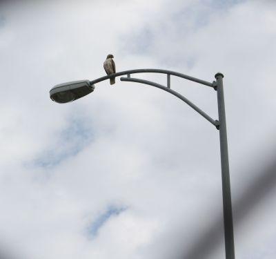 photo 4 lightpole